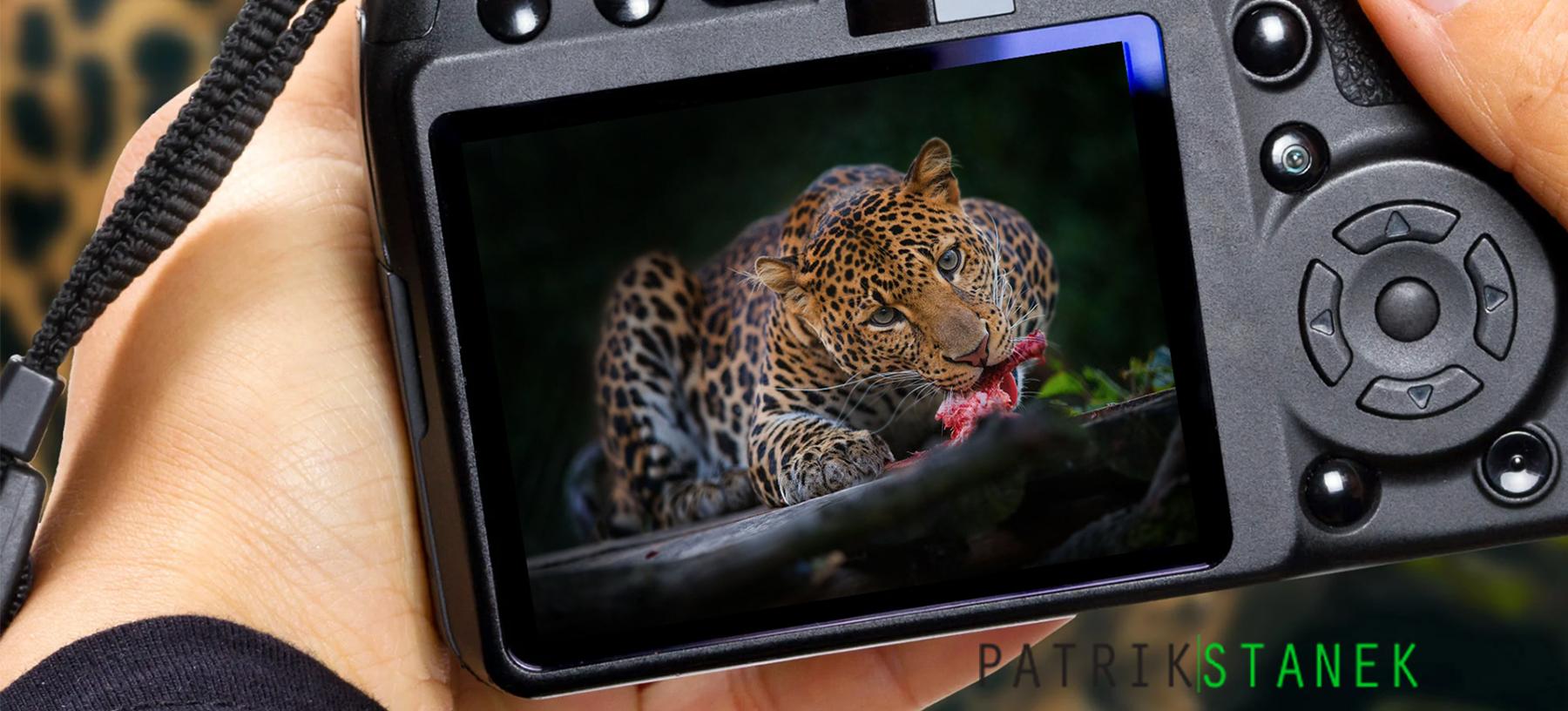 Fotografický kurz v 10 zoologických zahradách pro začátečníky i pokročilé